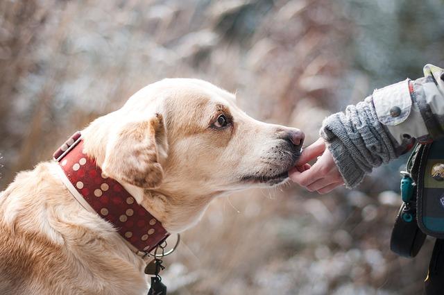 Was wenn ein Hund beisst?